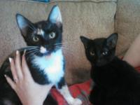 I have a black kitten and a calico kitten that I