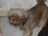 I have 2 adult Shih Tzu's. Both Akc reg. 1 black & wht