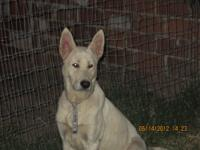 I have 2 adorable white German shepherd for sale. Male