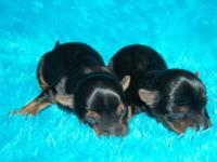I have 2 males and 1 female readily available. Born