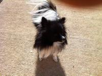 I have two pomeranians in need of a great home. The