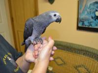 I have 2 little Congo African Grey Parrots to re-home.