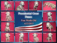 Presidential Great Danes is proud to present our