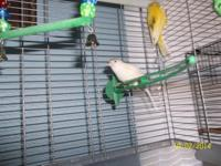 I have 2 canaries for sale, just around a year old. one
