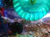 I have 2 beautiful Gerbils looking for a new home. 1 is