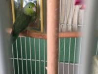 They are a lovely pair of parrotlets, both male and
