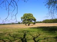 213.6 acres of sandy land with open pasture and approx
