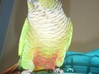 Bird 1. I have a male green cheek conure he was hatched