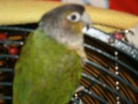 HI, SORRY ABOUT THE PICTURES, I MUST SELL MY BIRDS DO
