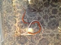 I have 2 Corn Snakes that I am looking to re-home. They