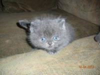 2 ADORABLE KITTENS BORN AUGUST 29, 2012 FATHER IS