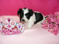 2 little hypoallergenic, non shedding sweethearts are