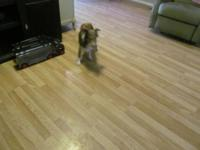 Two female shelties looking for a forever home. Their