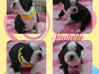 This is our last litter from my dame JoJo! She had a