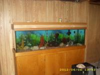 I have two fish tanks the first one is 120 gallon it is