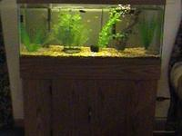 We have for sale complete fish tanks aquariums and all