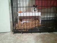 I HAVE 2 BUNNIES LOOKING FOR NEW HOMES. ONE