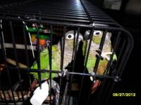 For sale is 2 Green Cheek Conure's, I have bought them