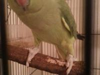 I have 2 one years of age indian ringnecks for sale. I