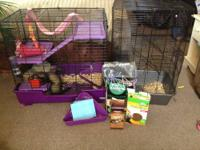 I have 2 adorable chinchillas they are friendly, sweet,