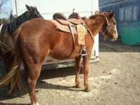 We have 2 horses for sale we are asking 1200$ for the