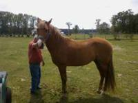 I have to horses for sale. One is a 7 year old