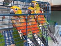 I have 2 Jenday conure babies for sale. They were