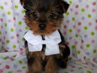 Title 2 Lefts Teacup Yorkshire terrier pups