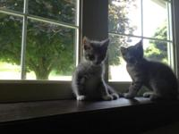 These individuals were found abandoned on the road. The