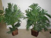 2 INDOOR DECORATIVE PLANTS .CALL  . $ 80 . Location: