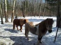 I have Two miniature horses for sale. Price is