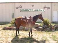 Tank: 15.3 registered AQHA broke gelding! Would make a