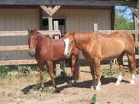 I have a 2 older geldings that I would like to find a