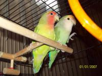 i have 2 love birds i bought 5 month ago i try to give