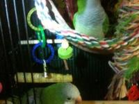 2-Quaker parrots available for sale. They talk and