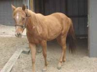 2 RED QUARTER HORSE MARES, THEY ARE SISTERS. THE