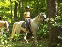 I have two horses I am looking for a home for. The
