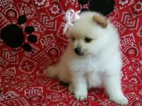 I have 2 amazing tiny purebred pom puppies that are
