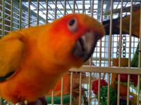 I have a proven male sun conure and a female sun conure