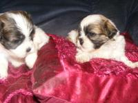 I'm selling two UKC registered females. They are 50%