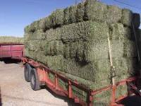 2 - WIRE ALFALFA BALES!! Very green, heavy bales.