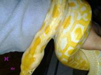 i have a 5 foot albino female burmese python and a 6