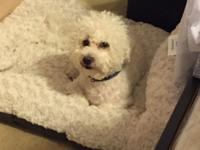 I have a 2 year old maltipoo up for adoption. He is not