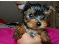 We have 2 purebred female Yorkie puppies in need