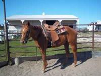 2 Year Old Registered Quarter Horse Mare For Sale. This