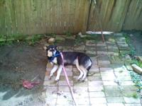 I have a 2yr old husky mix dog for sale. Good with kids
