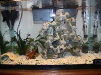 20 gallon aquarium, heater, backfilter, powerhead,