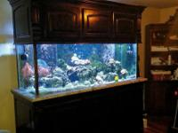 Beautiful 200 gallon glass aquarium with custom built