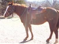 2003 AQHA Sorrel mare, 15-15.1 hands tall and well