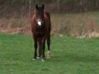 Onyx is an AQHA 2 yr old (March 6, 2010) filly out of A